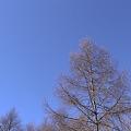 森のさんぽ  DSC02432