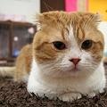 猫カフェ 猫のまほう&キャットマジック