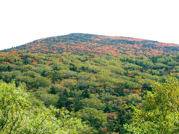 薬師岳北面の紅葉