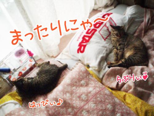Photos: 090619-まったりツーショットにゃ!