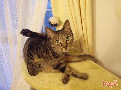 090915-【猫写真】決めポーズにゃ!?