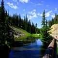 Yellowstone National Park内をドライブ中。。