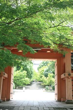 楓の緑と朱の門