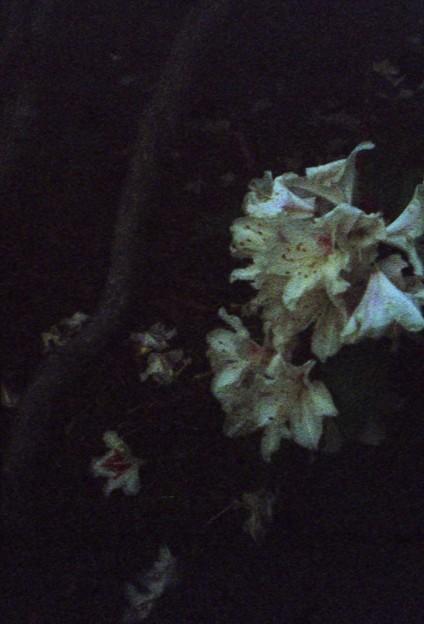 闇の中の白い花