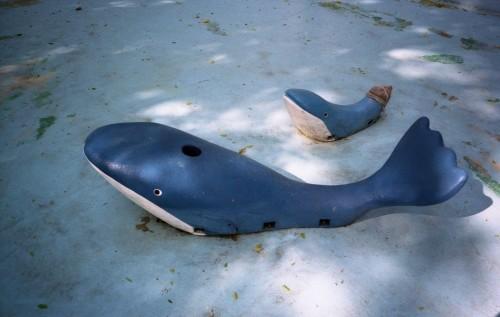 汚れたプールの中のクジラ