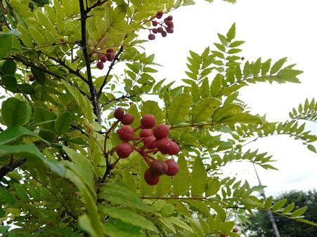 自然のクイズ(回答編)★この木はなぁに?