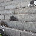 大阪城の猫