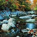 写真: 祖谷川の秋