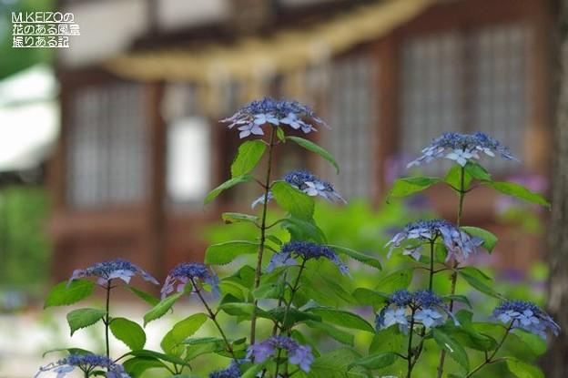 御裳神社 (13)