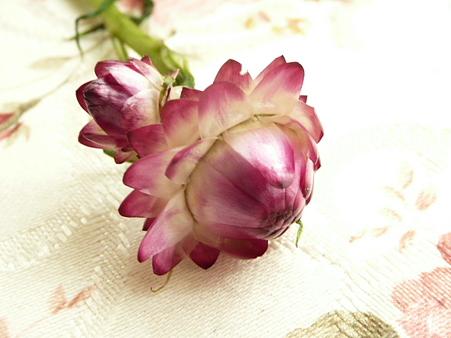 種から育てた花