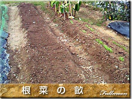 09根菜の畝
