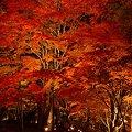 山中湖 夕焼けの渚 紅葉まつり