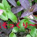写真: 2009.10.2