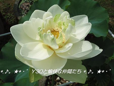 DSCF0059_pa