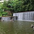 写真: カモのいる人造池 (中央公園)