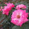 Photos: 神代植物公園その3