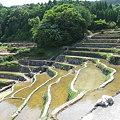 写真: 谷水棚田