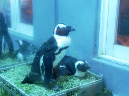 ペンギン居酒屋 セバスとマーヤ