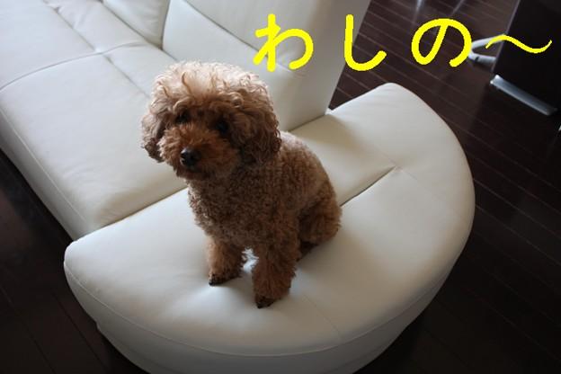 Photos: newソファ☆6