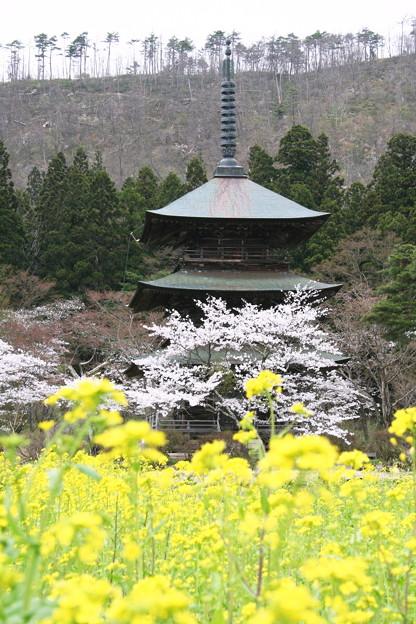Photos: 安久津八幡神社