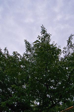 2009-07-09の空