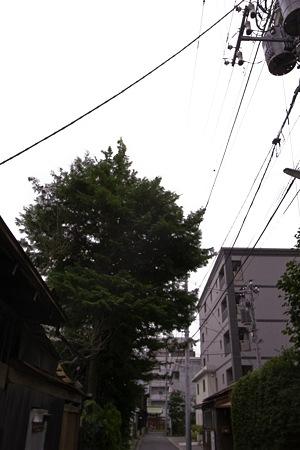 2009-08-12の空1