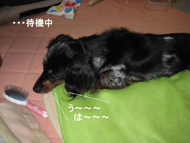 写真: senna0264