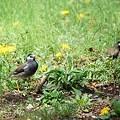 写真: 公園の鳥