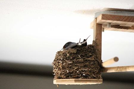 かさ高い巣