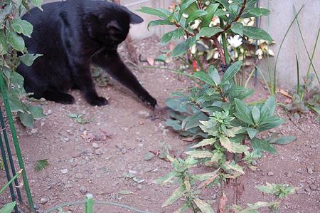 黒猫グ~グウがっ!