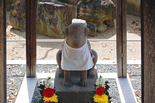 雪丸 聖徳太子の愛犬  達磨寺 2011.4.17