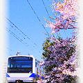 常磐線 藤代-佐貫 E531系普通列車