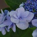 Photos: 20090620_144201