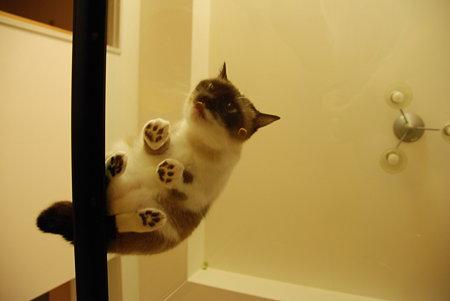猫を下から見てみると 2