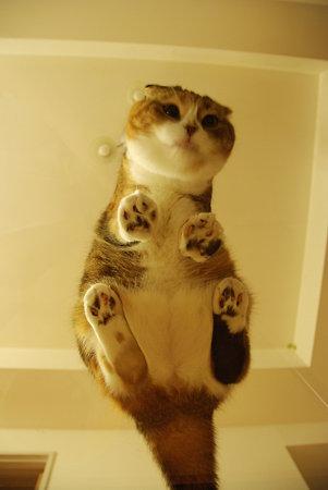猫を下から見てみると 3