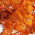 2-そして今日の抜け殻と紅葉