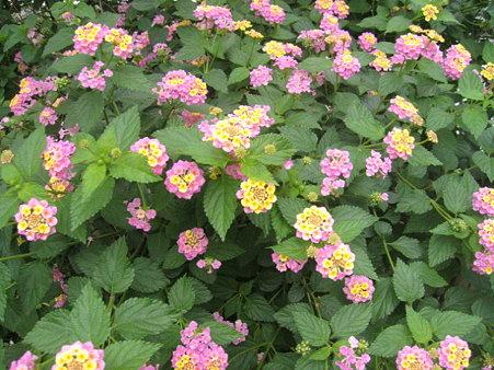鎌倉で見たお花2
