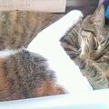 写真: 猫が机の前でなかよく絡んで...