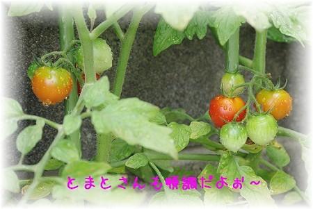 s-myu2009_0630(004)