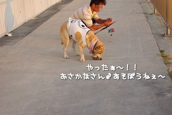 s-myu2009_0823(059)