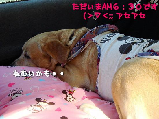 s-myu2009_0913(056)