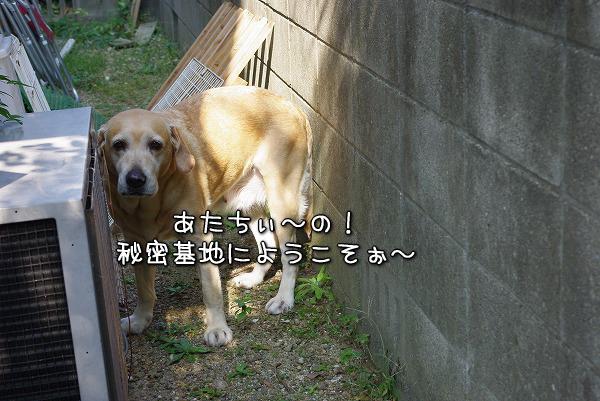 s-myu2009_1101(020)