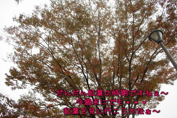s-myu2009_1101(078)