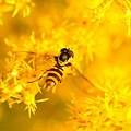Photos: 黄色の森で♪