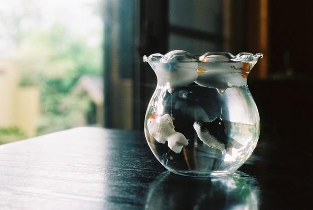 つがいの陶金魚