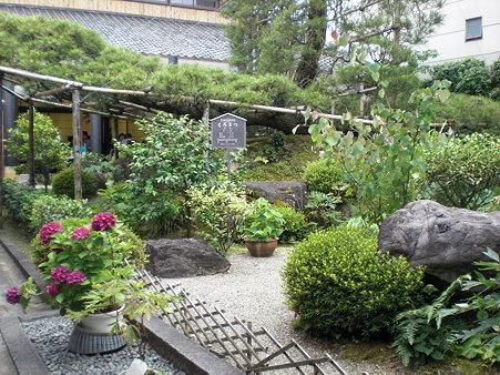 中村藤吉本店 お庭