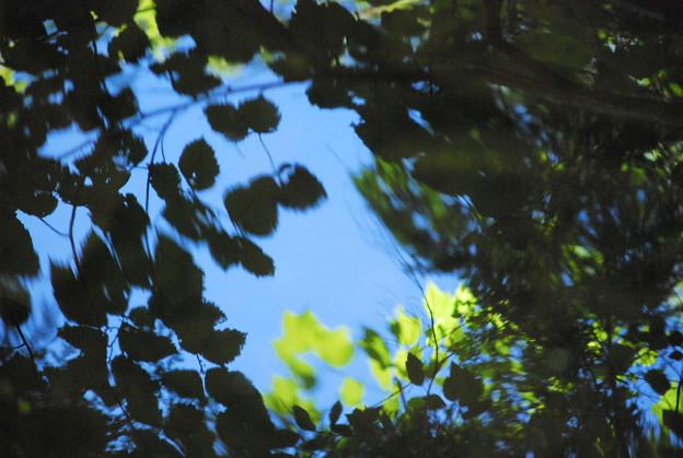 写真: Reflection1 9-6-09