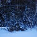 My Yard__Fallen Tree