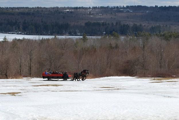 Photos: The Horse Sleigh 3-22-09