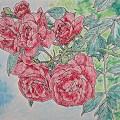 Photos: 風心地よく紅薔薇の咲き誇る
